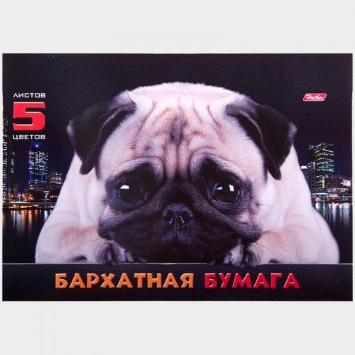 """Бархатная бумага A5 5 цв. 5 л. Hatber """"Мопс"""""""